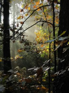 piekno-jesieni-w-lesie